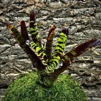 Neoregelia Bromeliad – Guacamole
