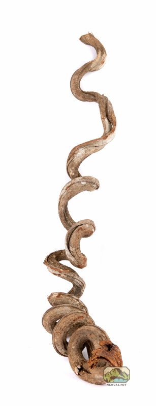 newcal liana vine thick