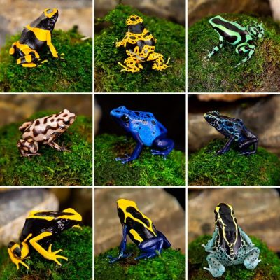 Available Dendrobates Dart Frogs in Canada