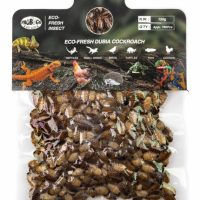 ProBugs Eco Fresh Dubia Cockroach 150gm small roaches
