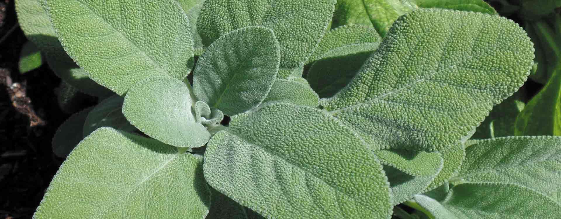 100% NON GMO Herbs