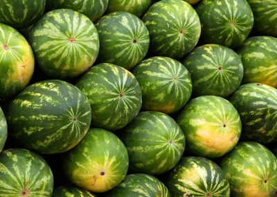 The Watermelon Hunters