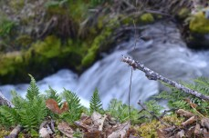 Plummer Creek.