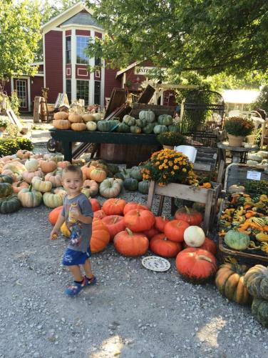 oodles-of-pumpkins-and-farmhouse