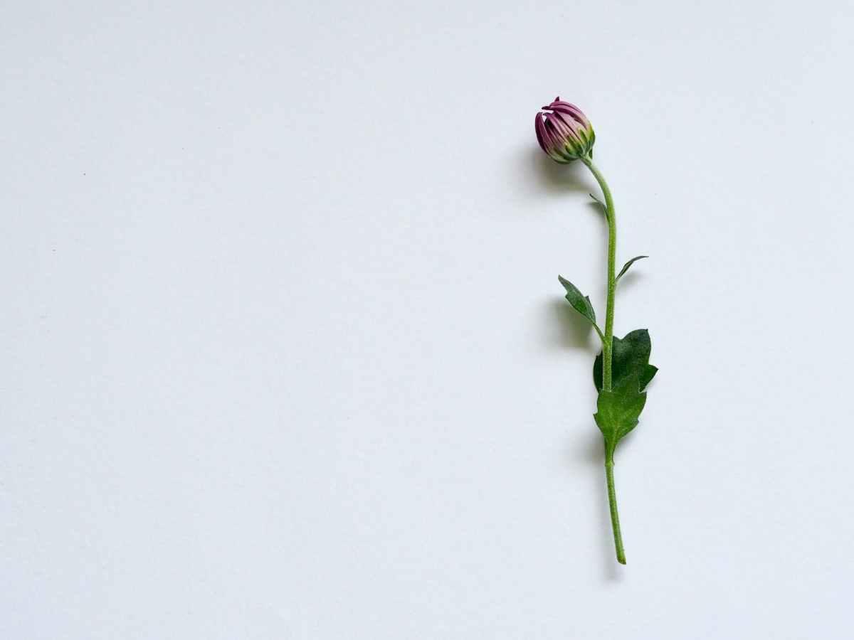 「盲信」を卒業するには「ダメな自分に愛と赦し」。