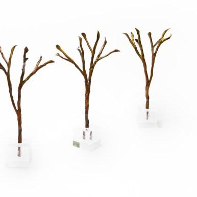 three-trees_2014
