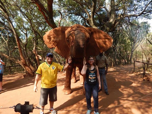 Turismo responsável com elefantes no Elephant Sanctuary, em Hartbeespoort dam (África do Sul)