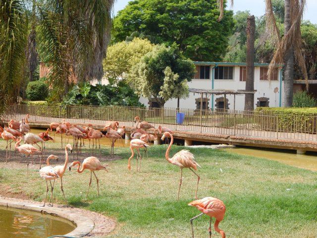 O que fazer em Pretória (África do Sul): National Zoological Gardens of South Africa