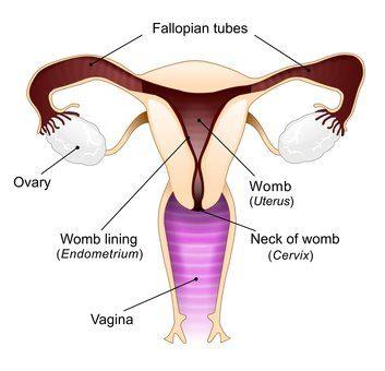 Natural Treatment And Ways to Unblocking Fallopian Tubes