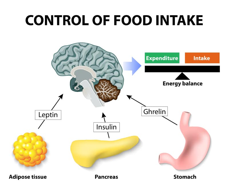 Control Food Intake 09