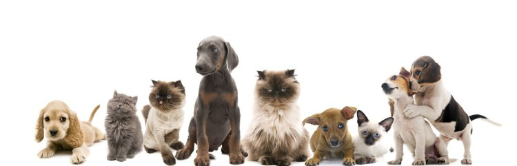 Puppies-and-a-cat