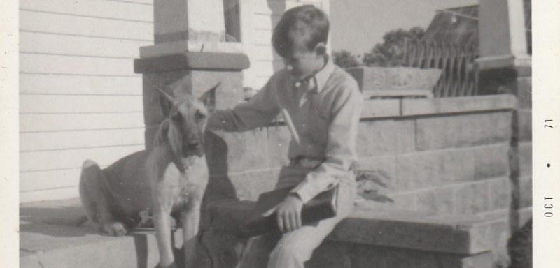 Sabrina Great Dane Dog