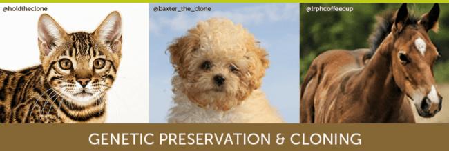 Pet cloning ad for Viagen pet cloning.