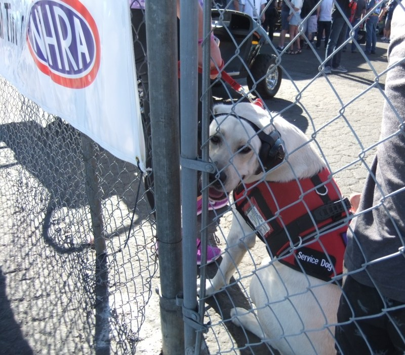 Service dog attends NHRA finals