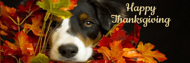 Dog hiding in leaves