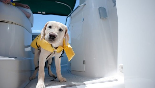 Dog on a boat with a life vest