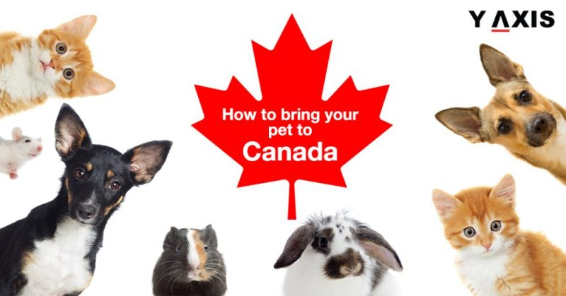 Can I Bring My Pet to Canada?
