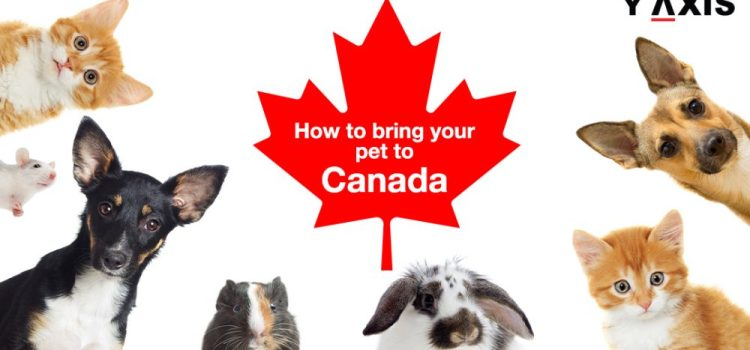 Bring pets to Canada