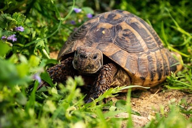 356 species of turtles