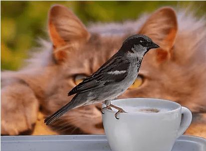 domestic cat hunts prey