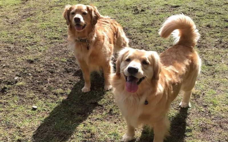 Dog Parks vs. COVID-19
