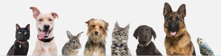 Do not give your pets THC. Hemp based CBD is okay.