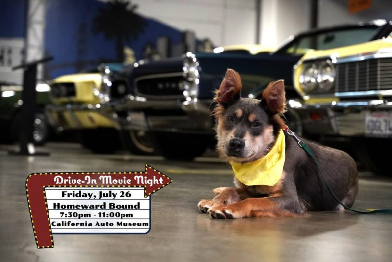 take your dog to a drive-in movie