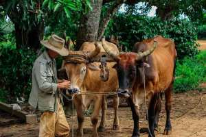 Shop,People, The Cuban Farmer