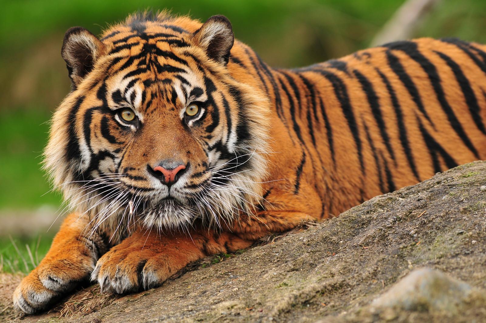Be A Crouching Tiger At Meetings