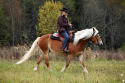 Créditos: horsemen/Shutterstock.com