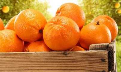 Apanhador de laranja é indenizado em R$ 50 mil por acidente de trabalho