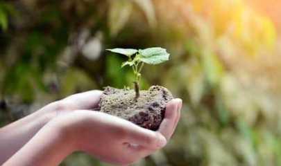 Municípios conseguem liminar para fazer jus ao ICMS Ecológico