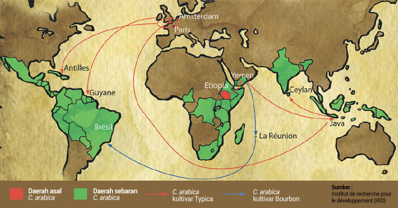 Penyebaran kopi arabika