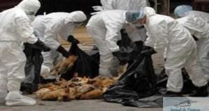 Focar de gripa aviara in judetul Dolj la granita cu Bulgaria aflat sub control 3