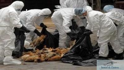 Focar de gripa aviara in judetul Dolj la granita cu Bulgaria aflat sub control 1
