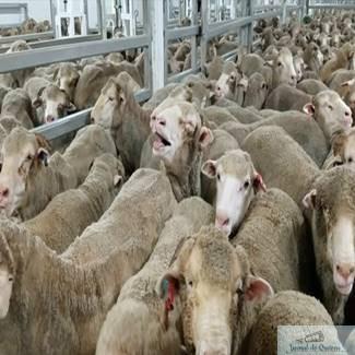 Comisarul european Andriukaitis ii cere lui Petre Daea sa opreasca livrarea a 70.000 de oi catre Golful Persic