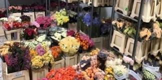 Controale la florarii : Peste 4.000 de flori confiscate!