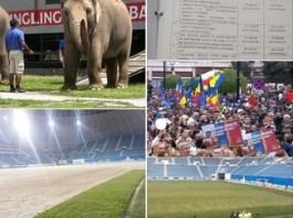 Marian Vasile , Consilier Municipal PNL Craiova : Elefantii au voie pe gazon (cu circul), fotbalistii NU! Psd-istii au voie pe gazon (la miting), fotbalistii NU!
