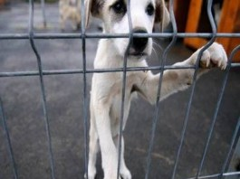 """Campania """"Adoptă Fericire"""" debutează sâmbătă, la Adăpostul canin Breasta"""