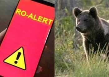 Locuitorii comunei Corbeni vor protesta la București împotriva urșilor 2