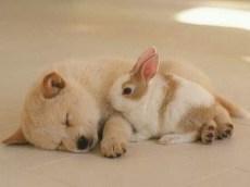 Cand animalele devin prieteni apropiati...
