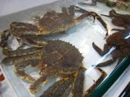 King crab; Lei Yue Mun