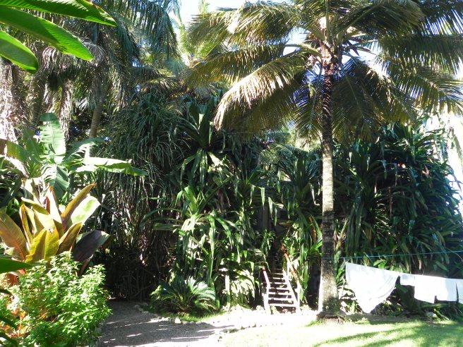 Tarzanhaus im Alis Surfcamp in Cabarete