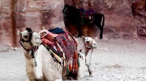 Beste Reisezeit Petra Jordanien