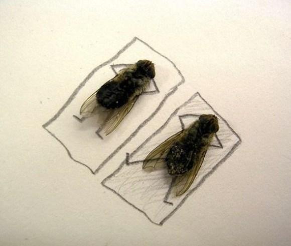 flies being human