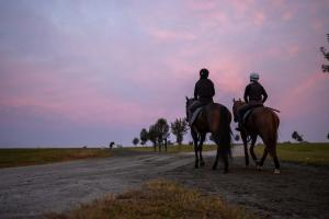 Two racehorses walking back from their workout at sunrise.