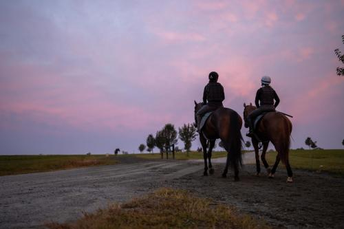 The horse racing experience includes watching your racehorse come out for morning training sessions, as seen here.