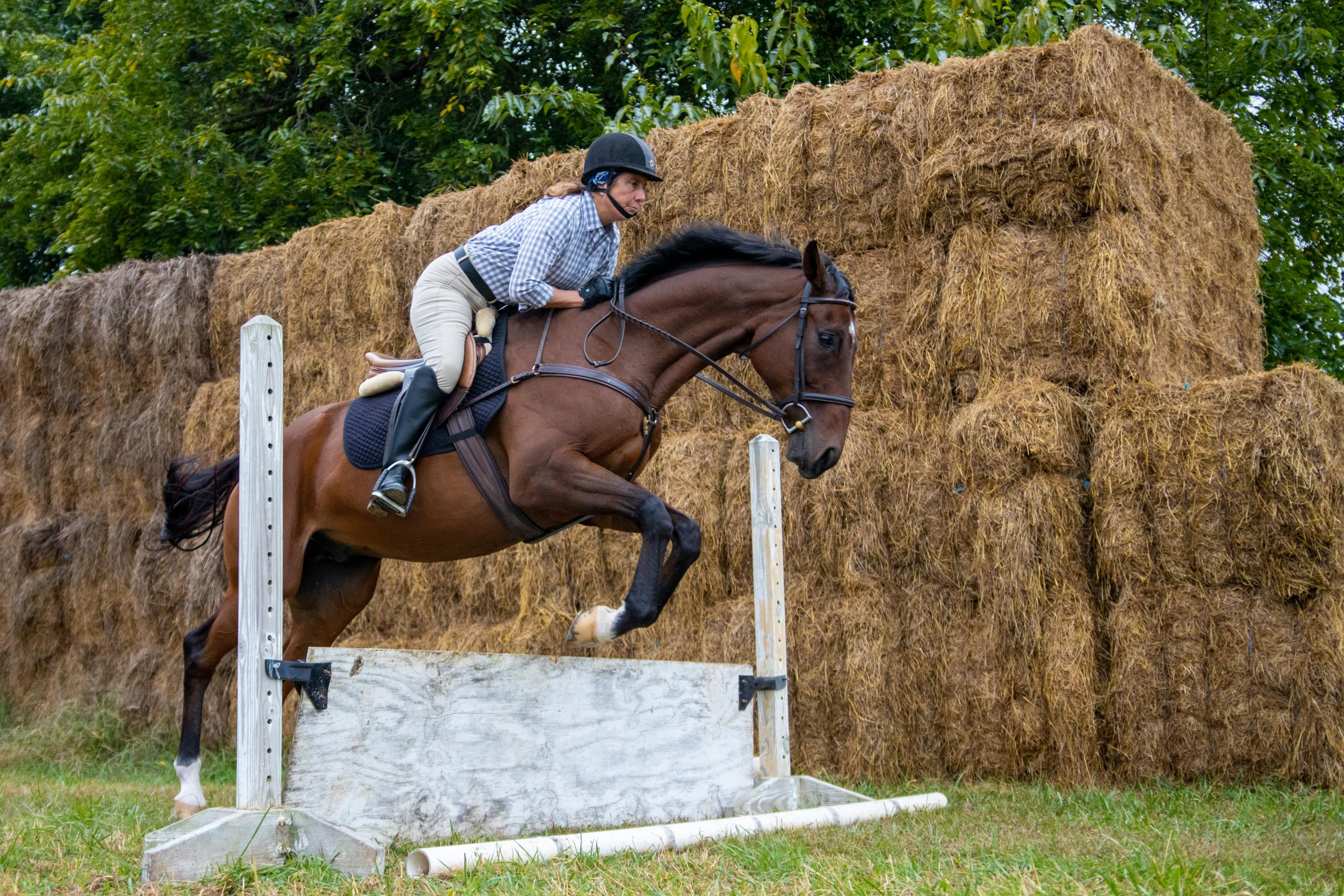 Former thoroughbred racehorse for sale, Night Vigil, is jumping over a wooden barrier in front of hay bales.