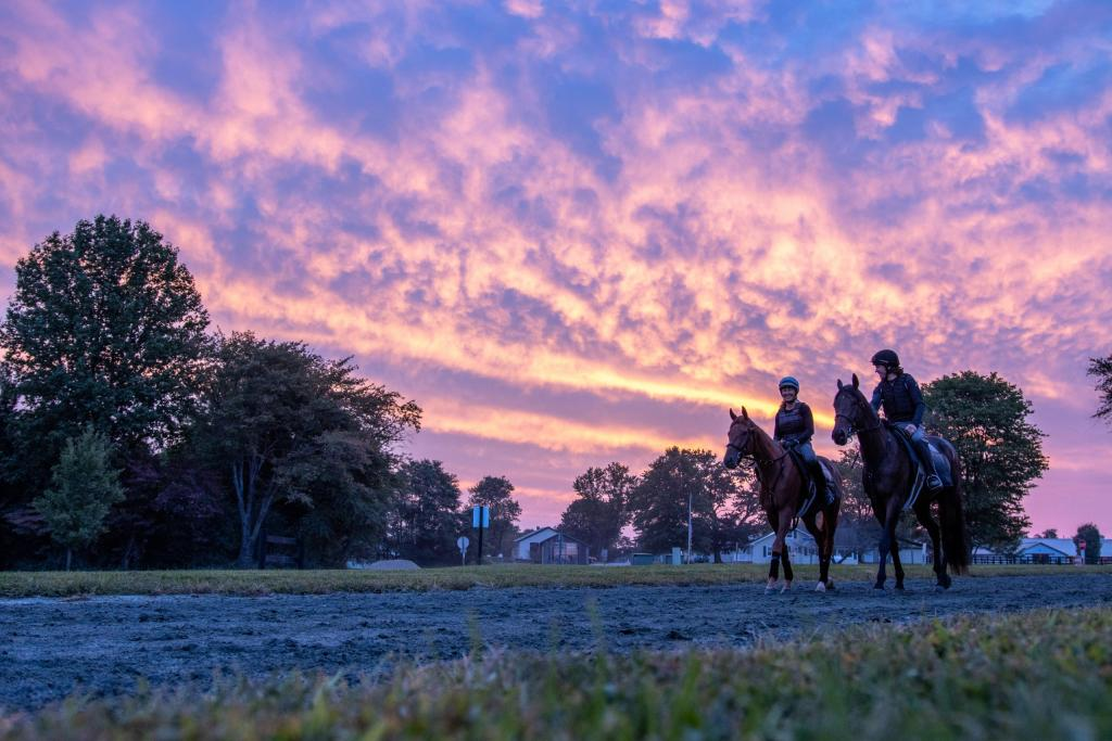 Two racehorses walk down a dirt path at sunrise. Racing partnership members have the opportunity to see their horse at the training facility.