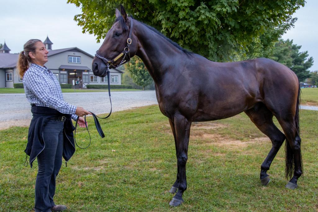 Racing opportunity with dark brown 3-year-old thoroughbred racehorse gelding Carlet's Bay. He stands side profile next to a woman at Fair Hill Training Facility.